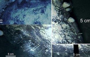 Encuentran unos misteriosos animales viviendo bajo el hielo de la Antártida