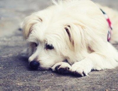 Condenada en Sevilla a nueve meses por asfixiar a su perra y tirarla al contenedor