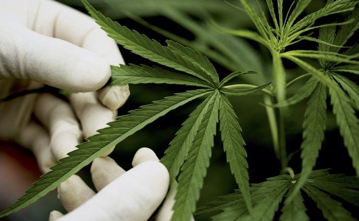 La marihuana se podrá encontrar en farmacias