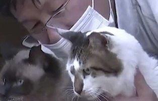 Este hombre lo dejó todo para cuidar de 41 gatos abandonados tras el desastre de Fukushima