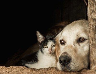 La cepa británica de coronavirus también está haciendo enfermar a perros y a gatos
