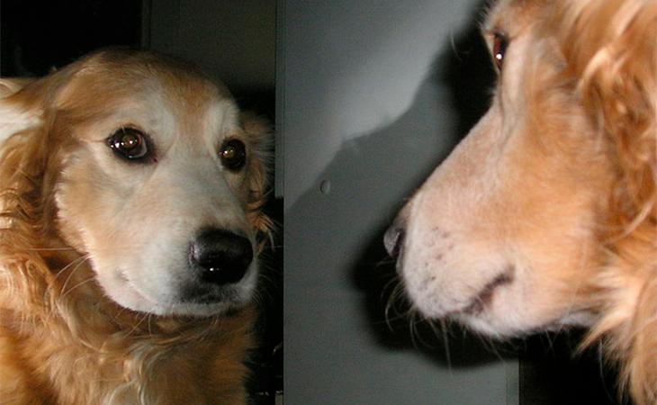 El pobre perro replanteándose su existencia
