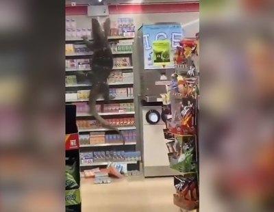 El impactante vídeo del lagarto gigante que se coló en un supermercado de Tailandia