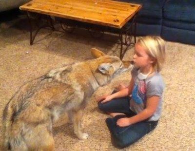 Un padre se confunde y en vez de adoptar un perro para su hija, adopta un coyote: lo que sucedió