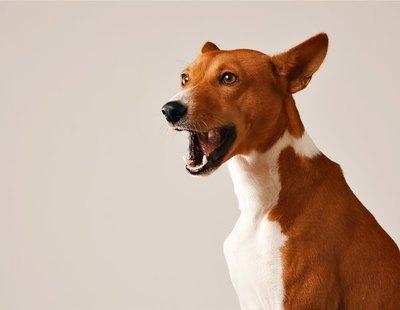 ¿Pueden los perros hablar realmente? Esto es lo que dice la ciencia