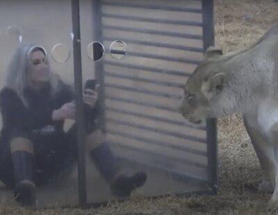 El zoo inverso de Sudáfrica: encierran a los humanos en jaulas mientras que los animales caminan libres