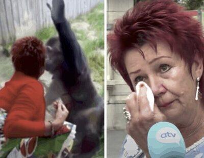 Prohíben entrar en un zoo de Bélgica a una mujer por comenzar una relación con un chimpancé