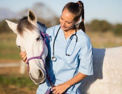 Las autoridades estadounidenses piden a su población que dejen de tomar desparasitante de caballos para tratar la Covid