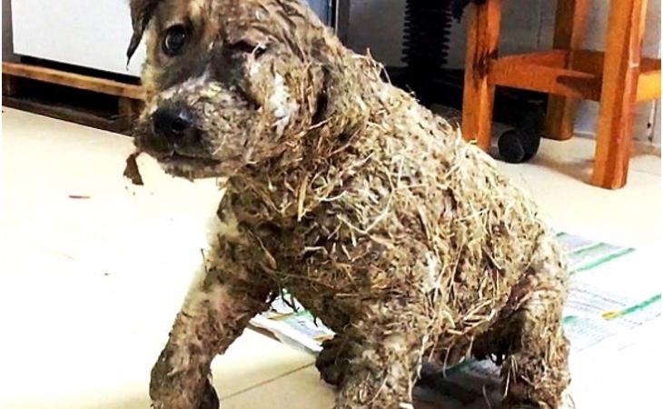 El cachorro casi muere por la extrema crueldad de unos jóvenes