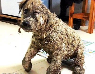 Unos adolescentes intentan ahogar a un perro en pegamento, pero es salvado a tiempo