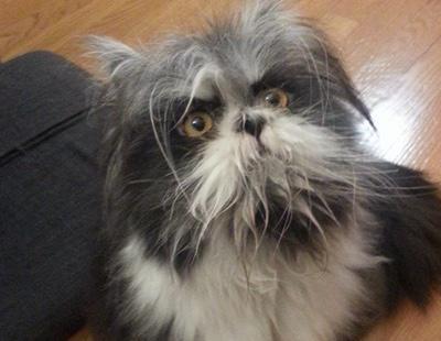 ¿Gato o perro? La nueva foto que divide Internet