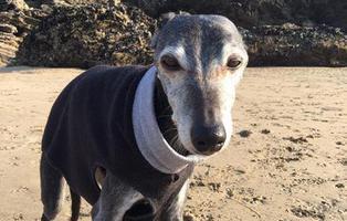 Cientos de mascotas acompañan a un perro en su último paseo
