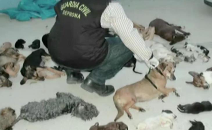 La Guardia Civil encontró multitud de animales muertos tirados por los suelos