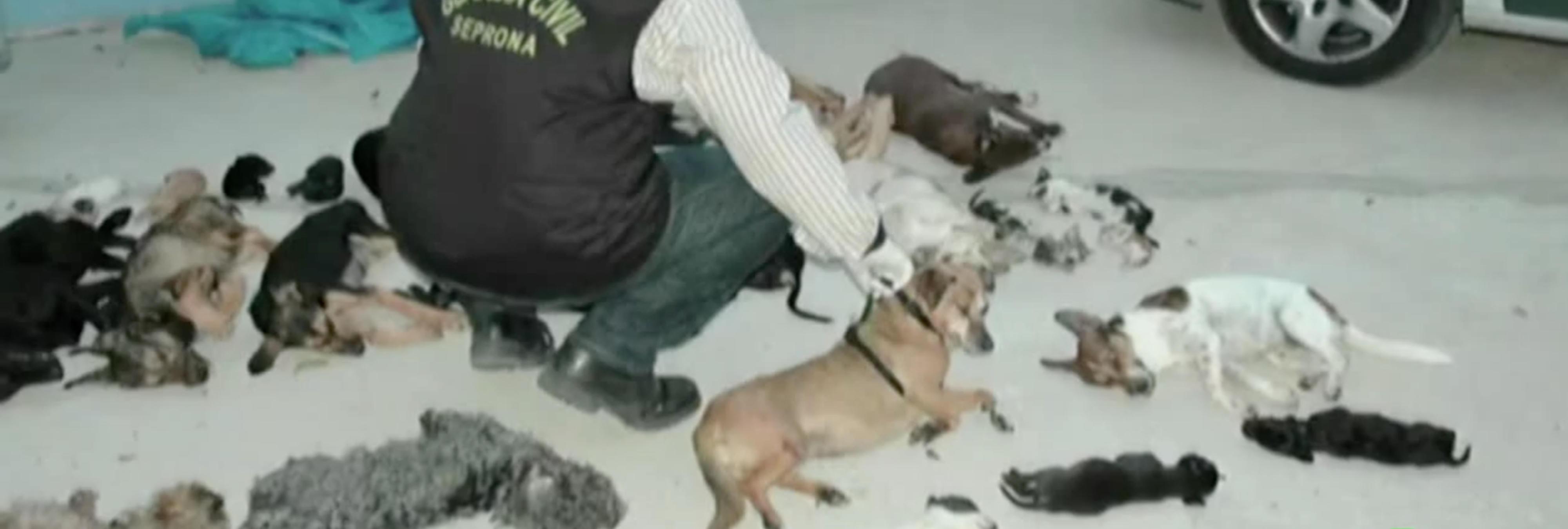 La acusada de exterminar a 2.200 perros y gatos entre terribles sufrimientos lo niega todo ante el juez