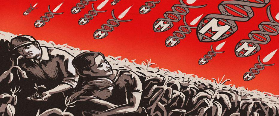 Cultivos transgénicos como método de explotación al campesinado