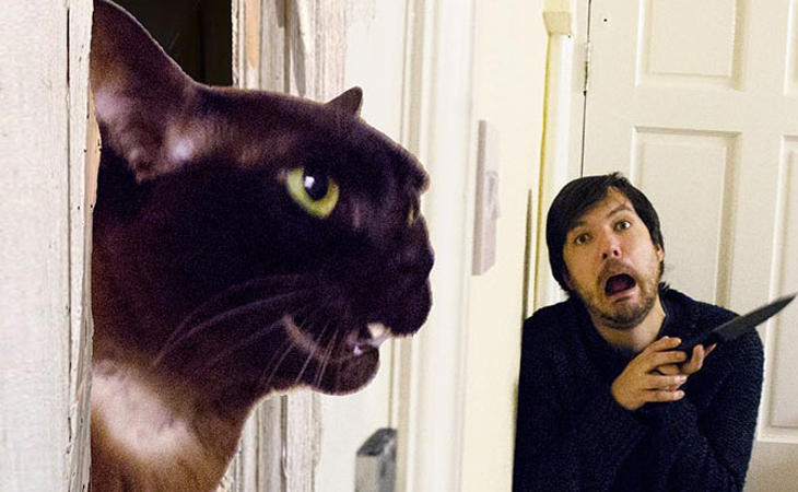 'El resplador' de los gatos