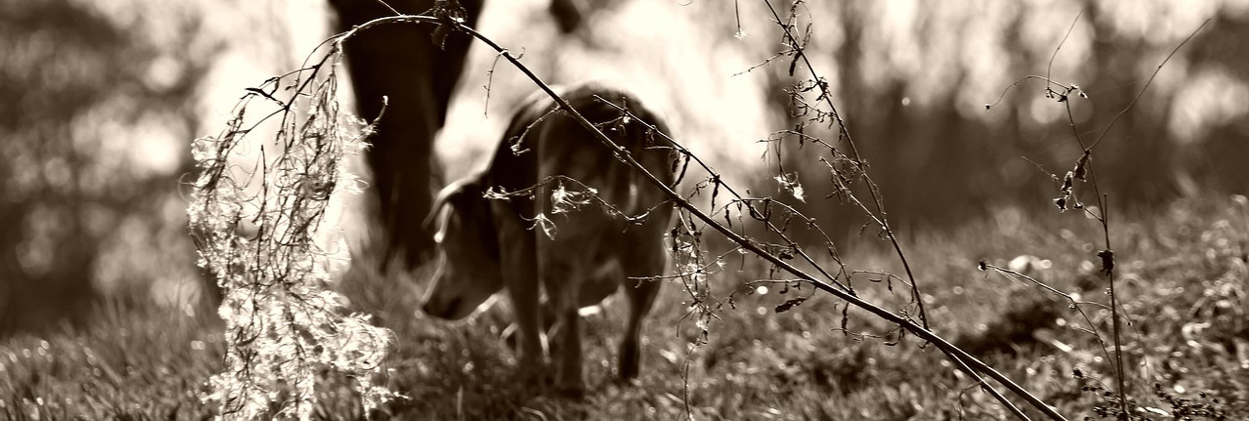 Un perro abandonado ve cómo su antigua familia va a buscar un nuevo perro a la misma protectora
