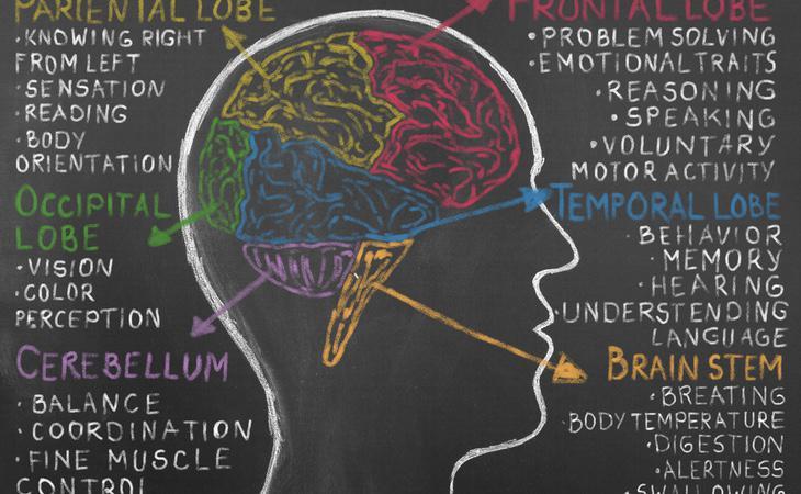Durante el estudio se activó la corteza prefrontal mediana