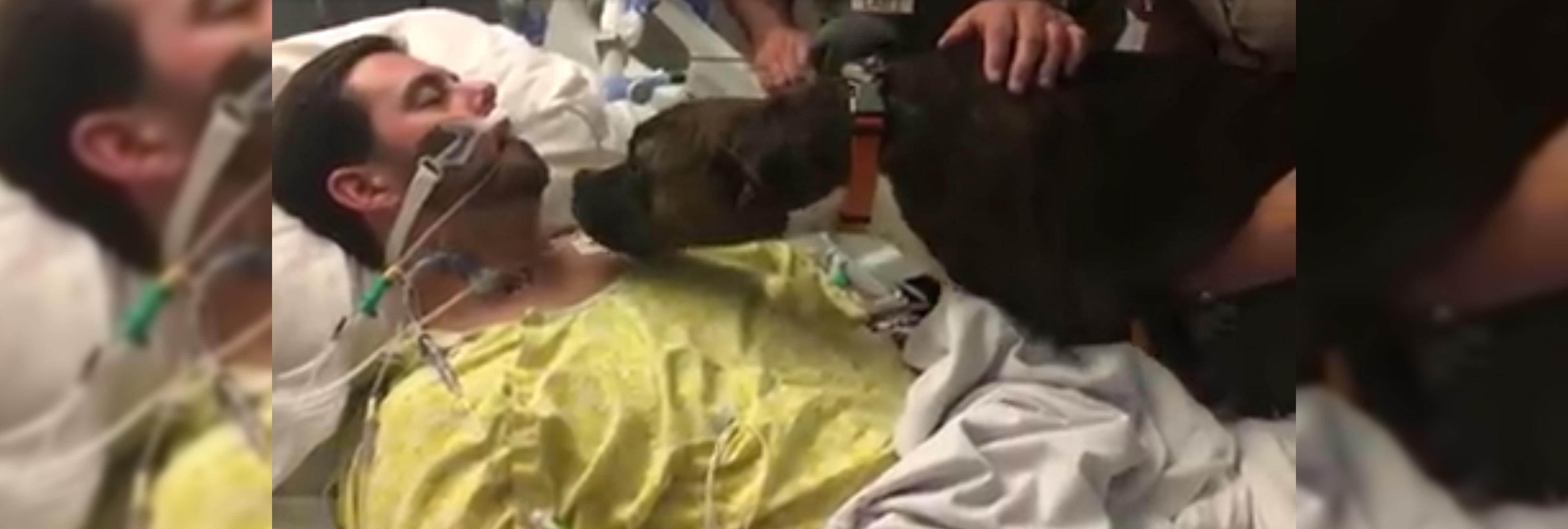 La emotiva despedida entre una perra y su dueño antes de que sea desconectado
