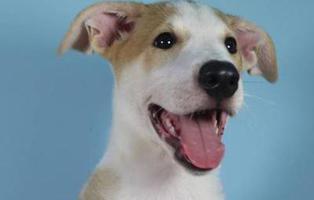 Una familia argentina recibe por primera vez un perro clonado por encargo