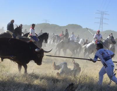 El Tribunal Constitucional ratifica la prohibición de matar al Toro de la Vega