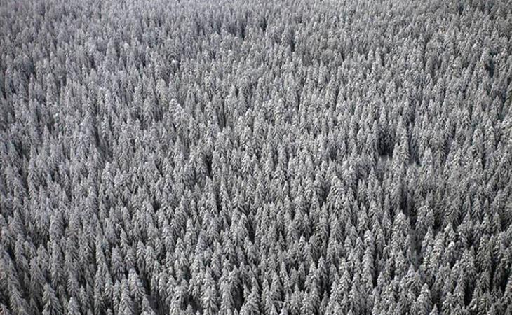 Los organizadores advierten: 'Esto será un bosque real, con animales salvajes peligrosos e insectos venenosos'