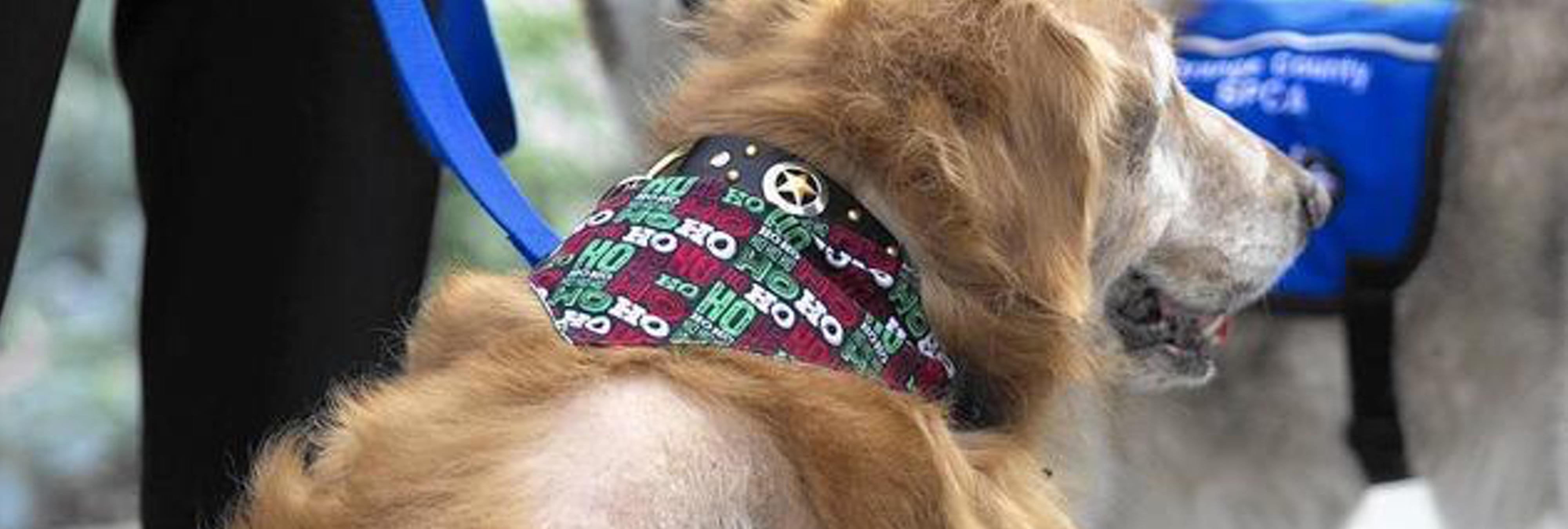 La dueña de un perro que tenía un tumor de 19 kilos es acusado de crueldad animal
