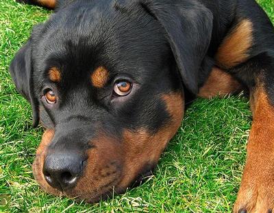 Detienen a un hombre en Vitoria por matar a su perro al lanzarlo desde un séptimo piso