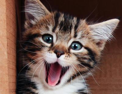El arañazo de gato te puede matar
