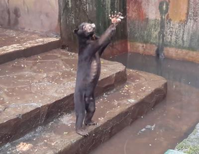 El cruel maltrato animal al que son sometidos estos osos de un zoo de Indonesia