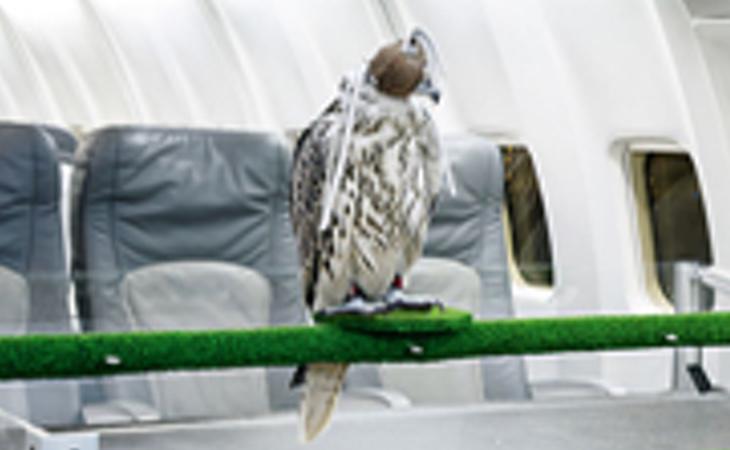 No sabemos si es un halcón o un pingüino, pero sí que vuela igual que un rey