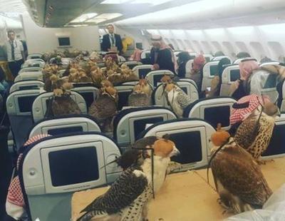 Un príncipe saudí compra 80 billetes de avión para poder volar con sus halcones