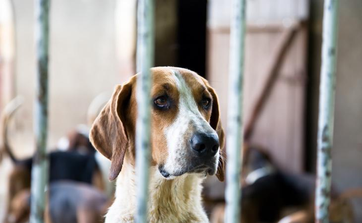 El maltrato animal es una lacra contra la que hay que luchar