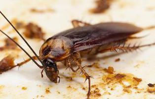Encuentran una cucaracha viva dentro del cerebro de una mujer