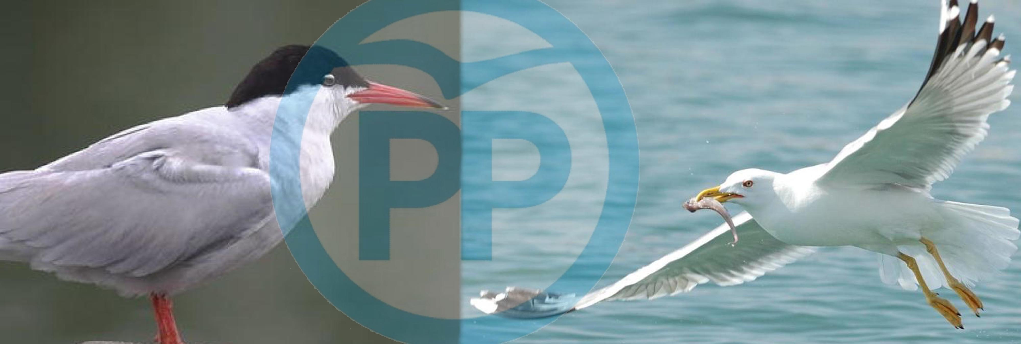 España dividida: ¿es el logo del PP una gaviota o un charrán?