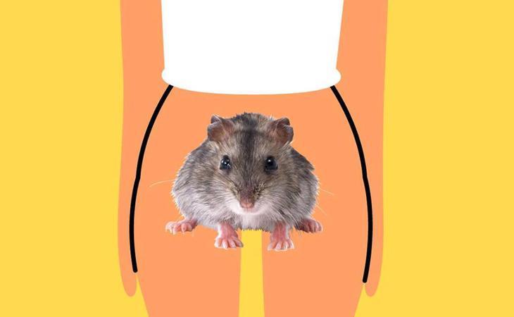 Suecia se decanta por los roedores para hablar de vulvas