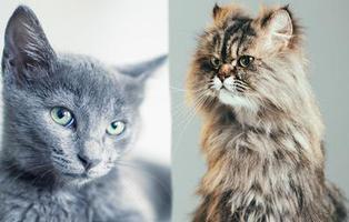 Es el Día Internacional del Gato y lo celebramos con este recopilatorio de los felinos más cuquis