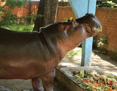 Asesinan a golpes al único hipopótamo de El Salvador