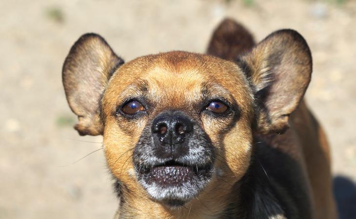 La amputación de la cola puede provocar diversas secuelas en los animales
