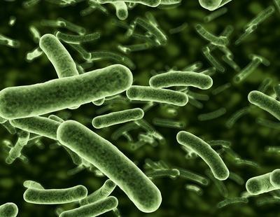 El secreto de la inmortalidad: una bacteria con 3,5 millones de años
