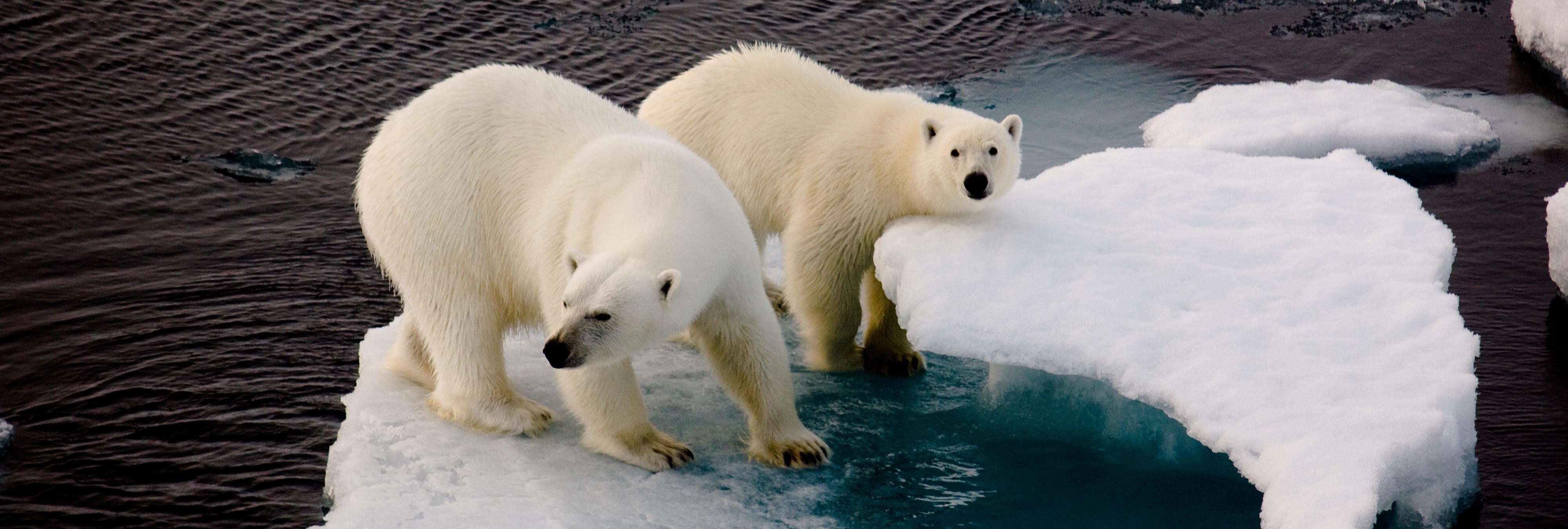 En 2030 podría haber un Polo Norte sin hielo