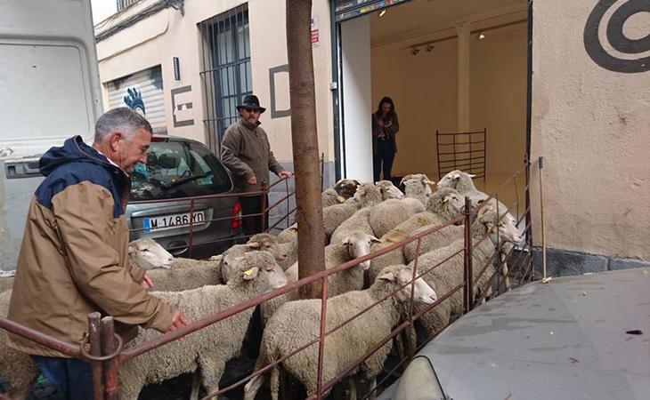 Tresaco asegura que el hacinamiento de los animales se debe a las recomendaciones de los ganaderos