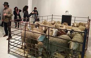 Un hombre hacina 20 ovejas en una galería de arte para criticar el arte