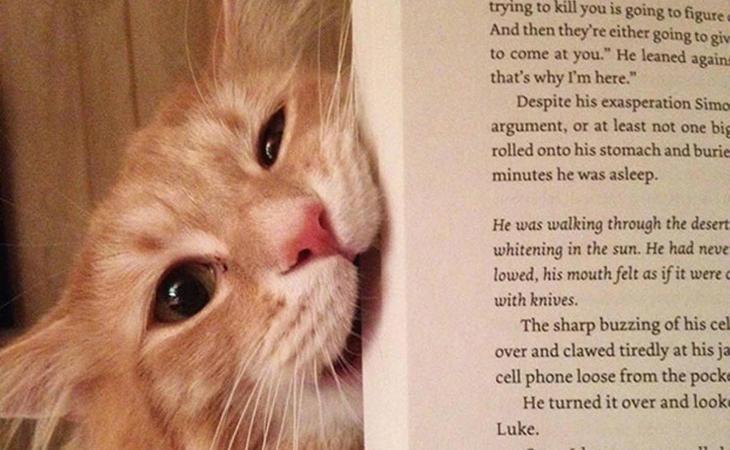 El estímulo preferido de los gatos eran los humanos