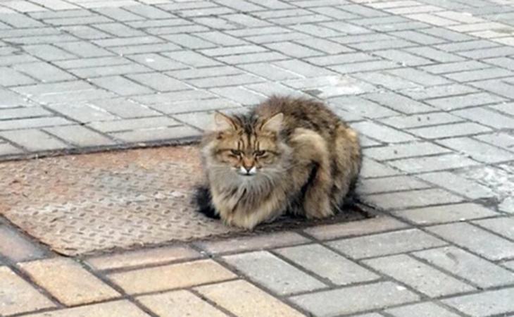 Gato que fue abandonado en Rusia