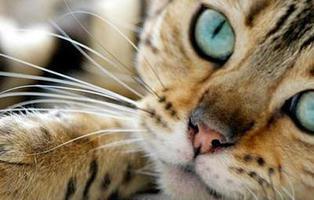Tu gato te quiere mucho más de lo que crees, y no solo por la comida