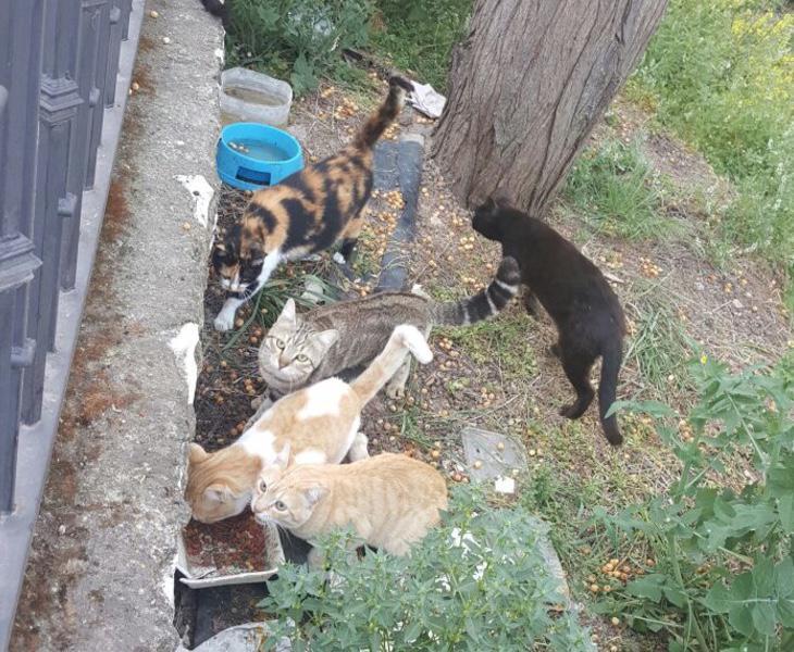 Los activistas han establecido un refugio para salvar a los gatos de los ataques