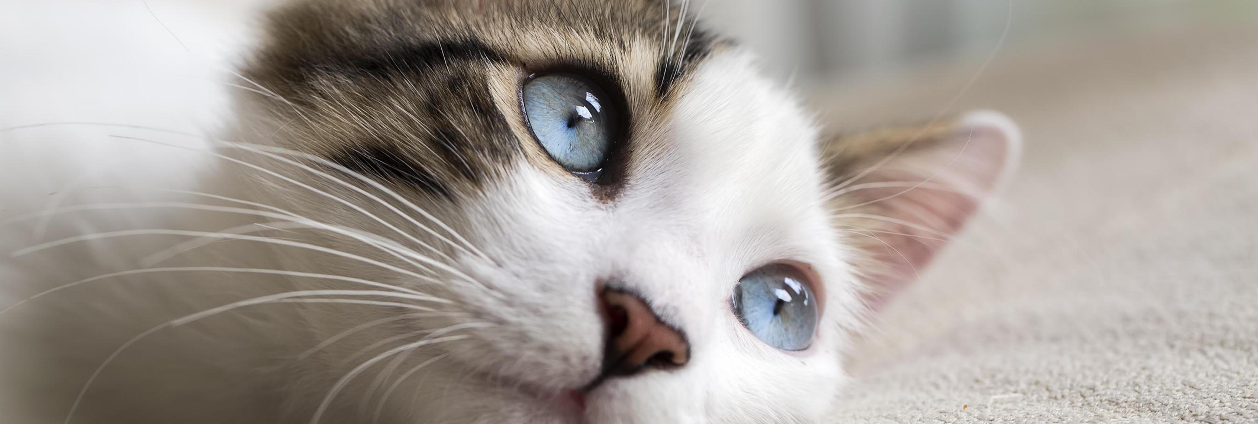 Un pueblo de Córdoba está exterminando a todos sus gatos