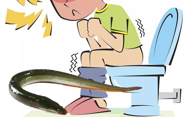 El anguila no cura el estreñimiento