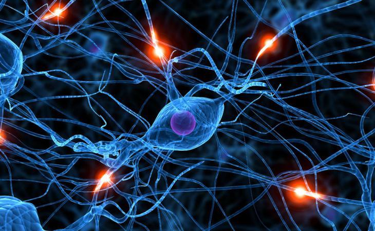 El Rubifrén puede alterar de manera grave la química cerebral